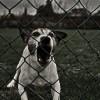 ST 5(73)/2013 Sprawy mieszkańców – gdy pies sąsiada nie daje nam spać